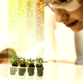Bayer opens application window for Grants4Traits™ and Grants4Biologicals™