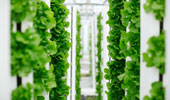 Bayer and Temasek unveil innovative new company focused on developing breakthroughs in vertical farming thumbnail